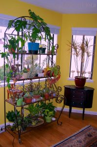 Houseplants by FarOutFlora