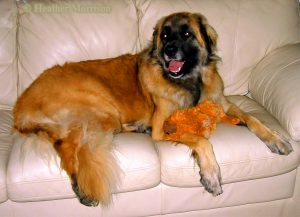 Nells the Couch Potato by Heather Morrison