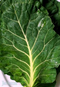 Collards Image Credit: Steven Jackson Photography