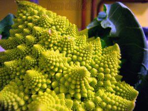 "'Green Italian Cauliflower"" Image Credit: Ben Dalton"